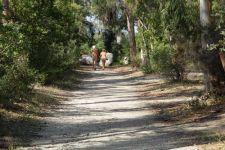 b_225_150_16777215_00_images_stories_naturisme_frankrijknaturisme_Corsica_bagheerapad.JPG